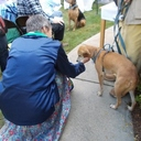 2015 Blessing of the Animals photo album thumbnail 17